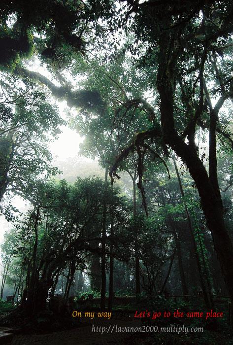 ต้นไม้ดึกดำบรรพ์